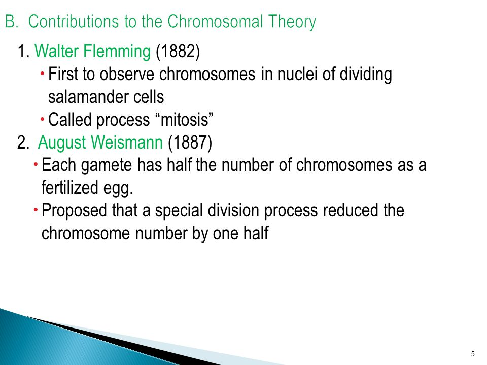 B. Contributions to the Chromosomal Theory