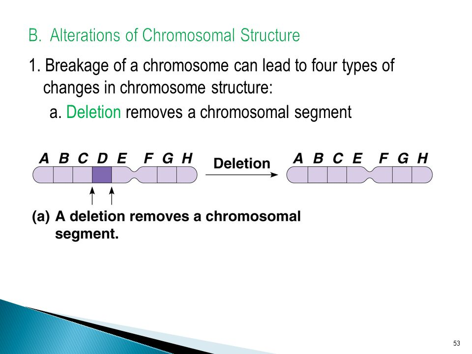 B. Alterations of Chromosomal Structure