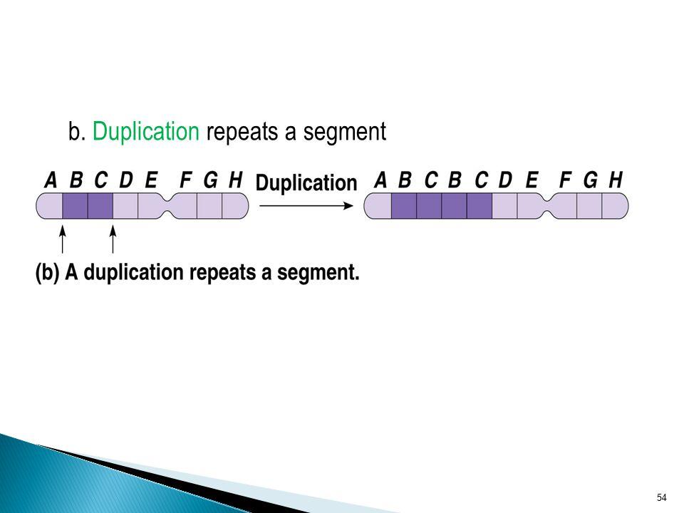 b. Duplication repeats a segment