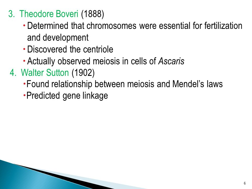 Discovered the centriole Actually observed meiosis in cells of Ascaris