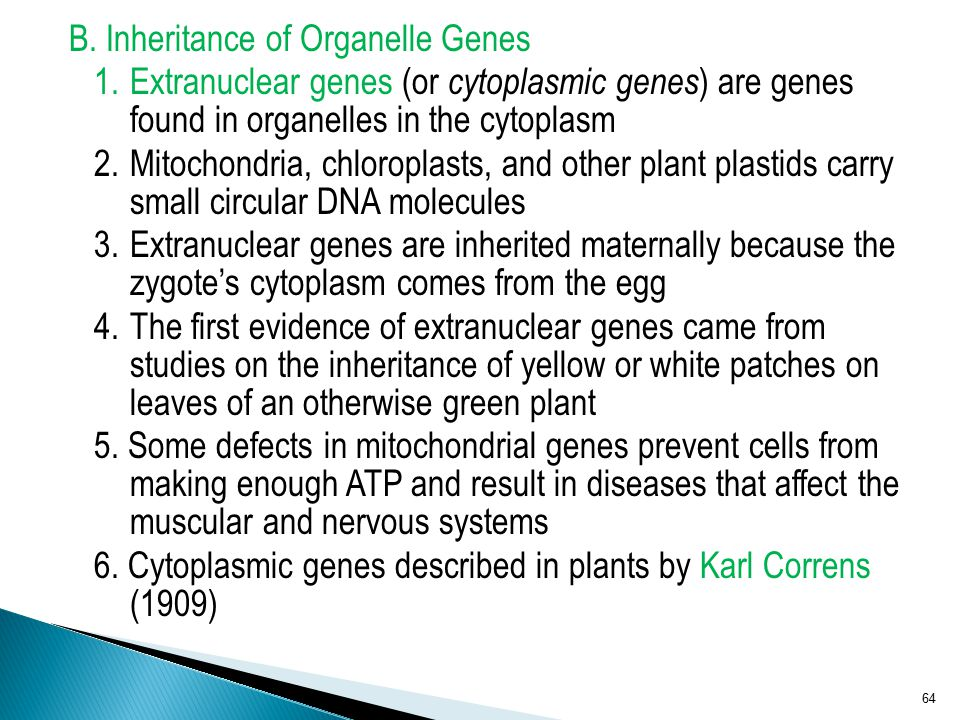 B. Inheritance of Organelle Genes