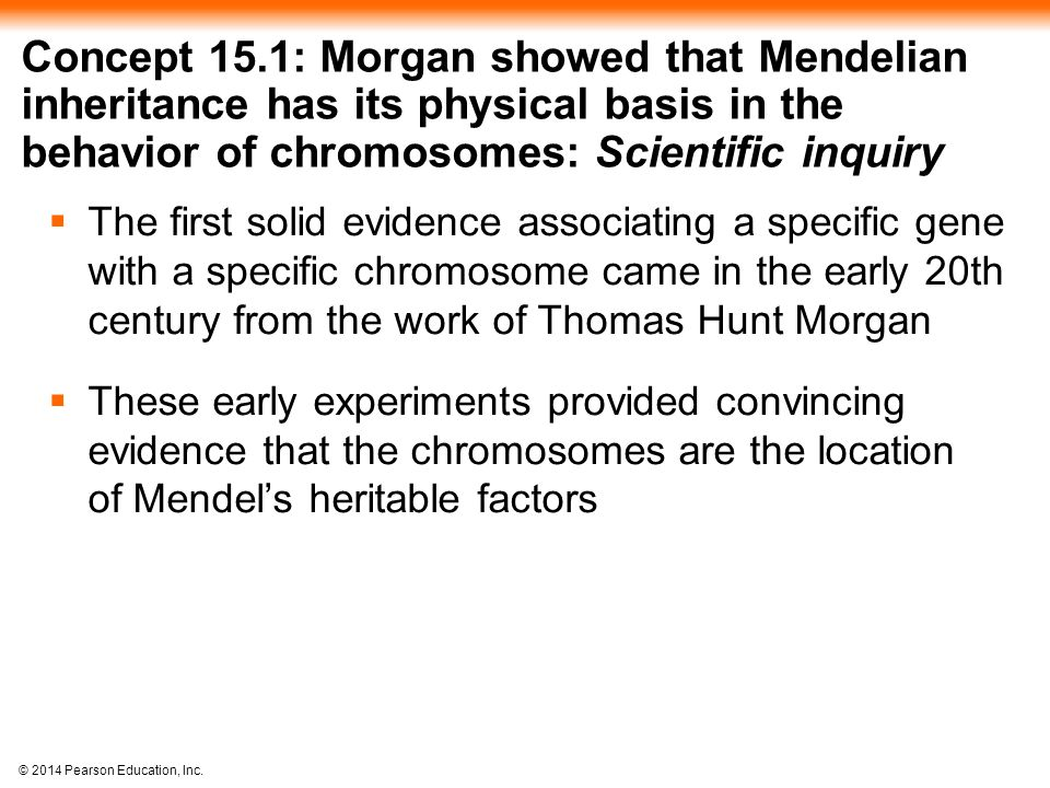 Concept 15.1: Morgan showed that Mendelian inheritance has its physical basis in the behavior of chromosomes: Scientific inquiry