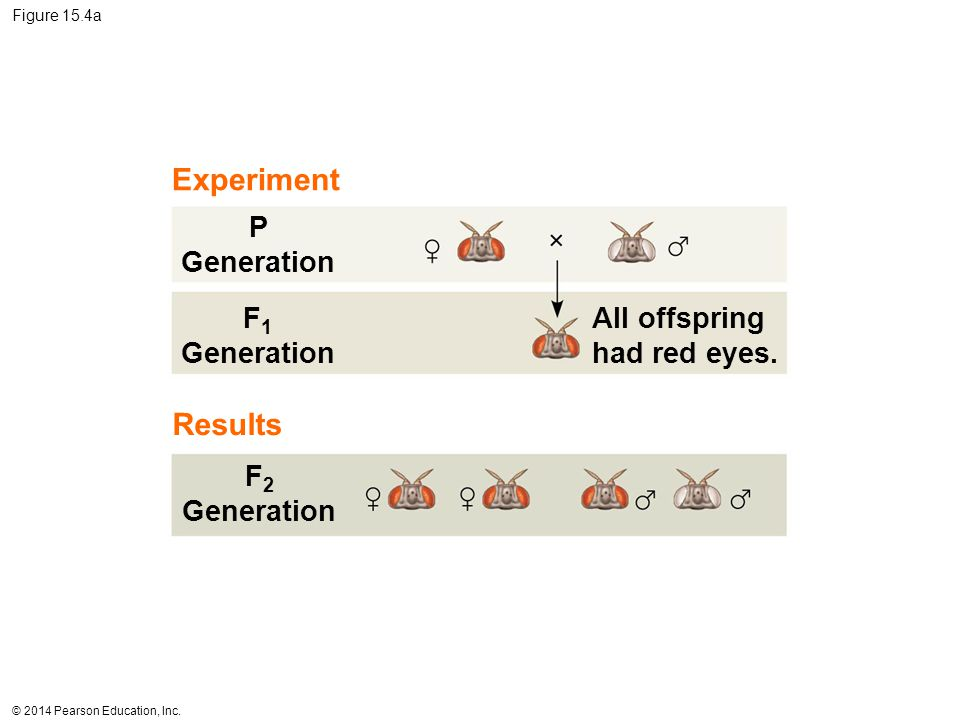 Experiment Results P Generation F1 Generation