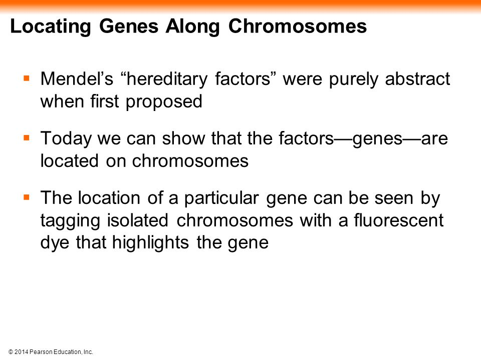 Locating Genes Along Chromosomes
