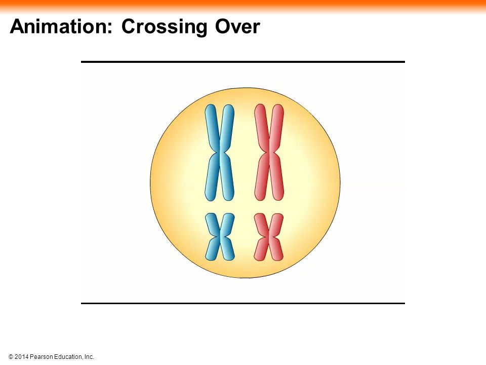 Animation: Crossing Over
