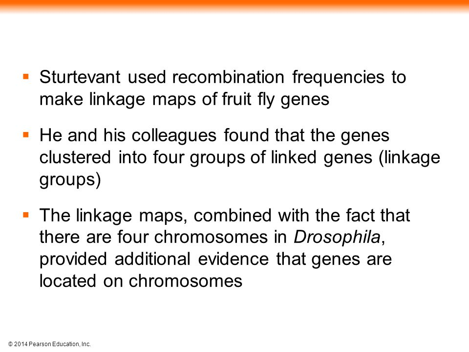 Sturtevant used recombination frequencies to make linkage maps of fruit fly genes