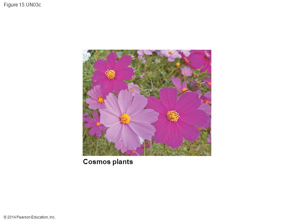 Cosmos plants Figure 15.UN03c