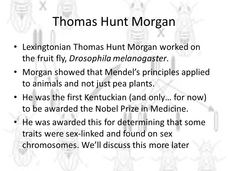Thomas Hunt Morgan Lexingtonian Thomas Hunt Morgan worked on the fruit fly, Drosophila melanogaster.