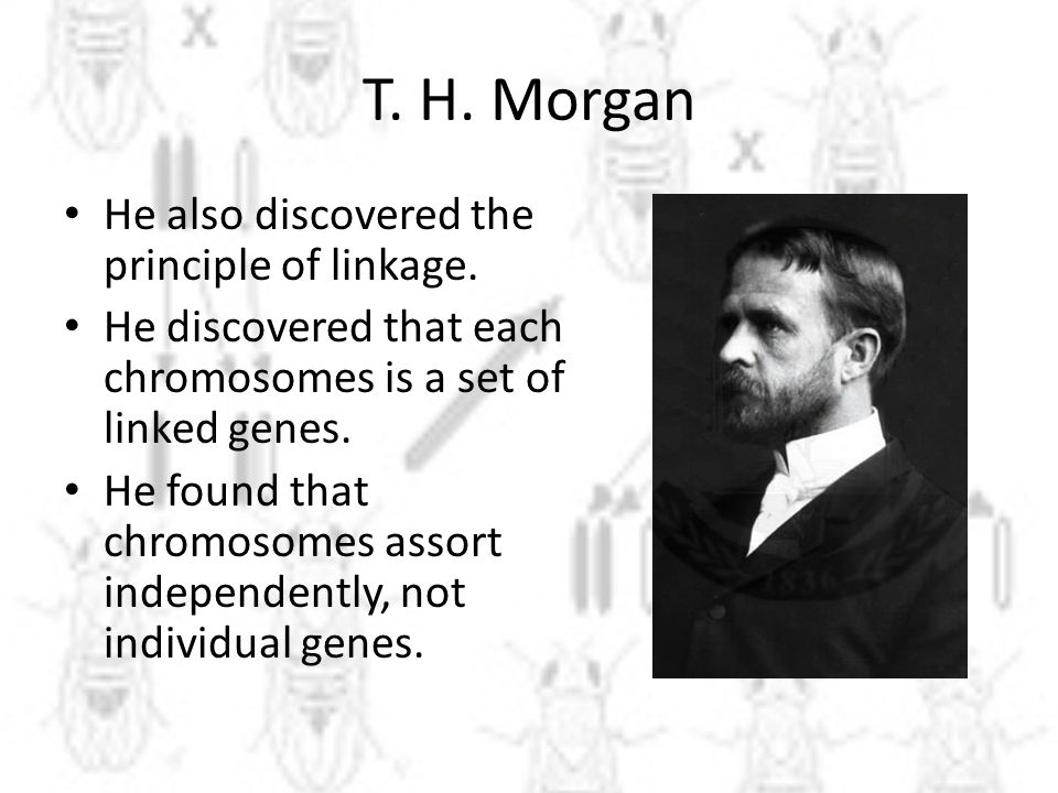 T. H. Morgan He also discovered the principle of linkage.