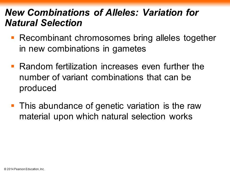 New Combinations of Alleles: Variation for Natural Selection