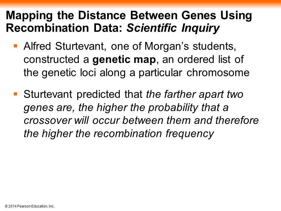 Mapping the Distance Between Genes Using Recombination Data: Scientific Inquiry
