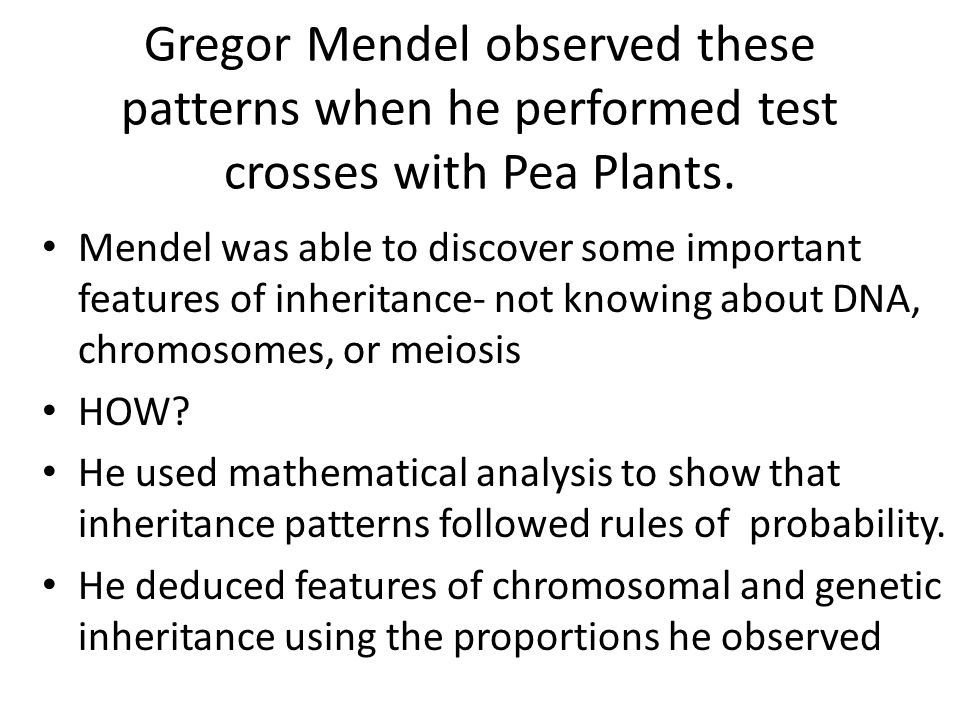 Gregor Mendel observed these patterns when he performed test crosses with Pea Plants.