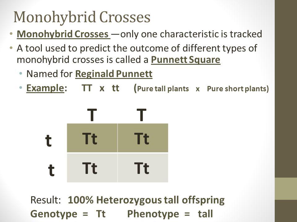 T T t t Tt Tt Tt Tt Monohybrid Crosses