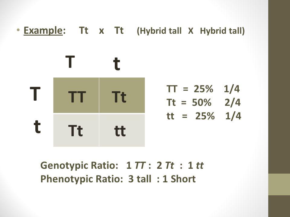 t T t T TT Tt Tt tt Example: Tt x Tt (Hybrid tall X Hybrid tall)