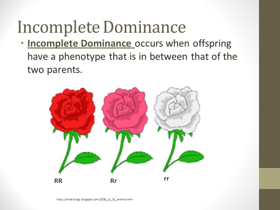 Incomplete Dominance Incomplete Dominance occurs when offspring have a phenotype that is in between that of the two parents.