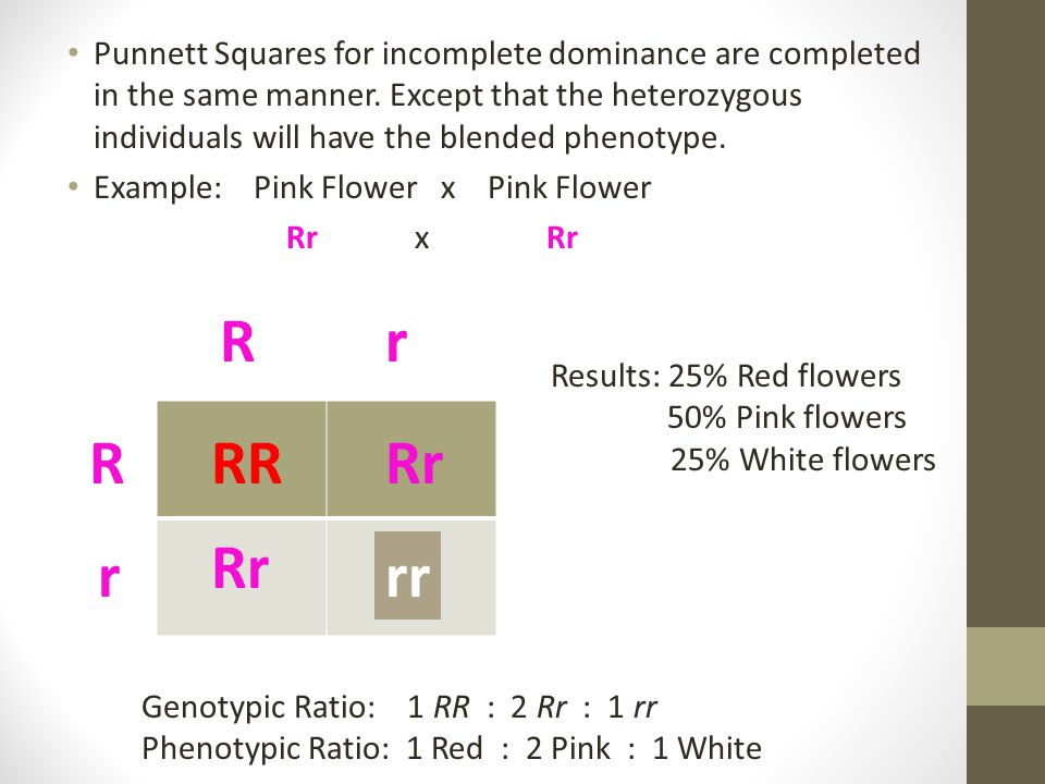 Punnett Squares for incomplete dominance are completed in the same manner. Except that the heterozygous individuals will have the blended phenotype.