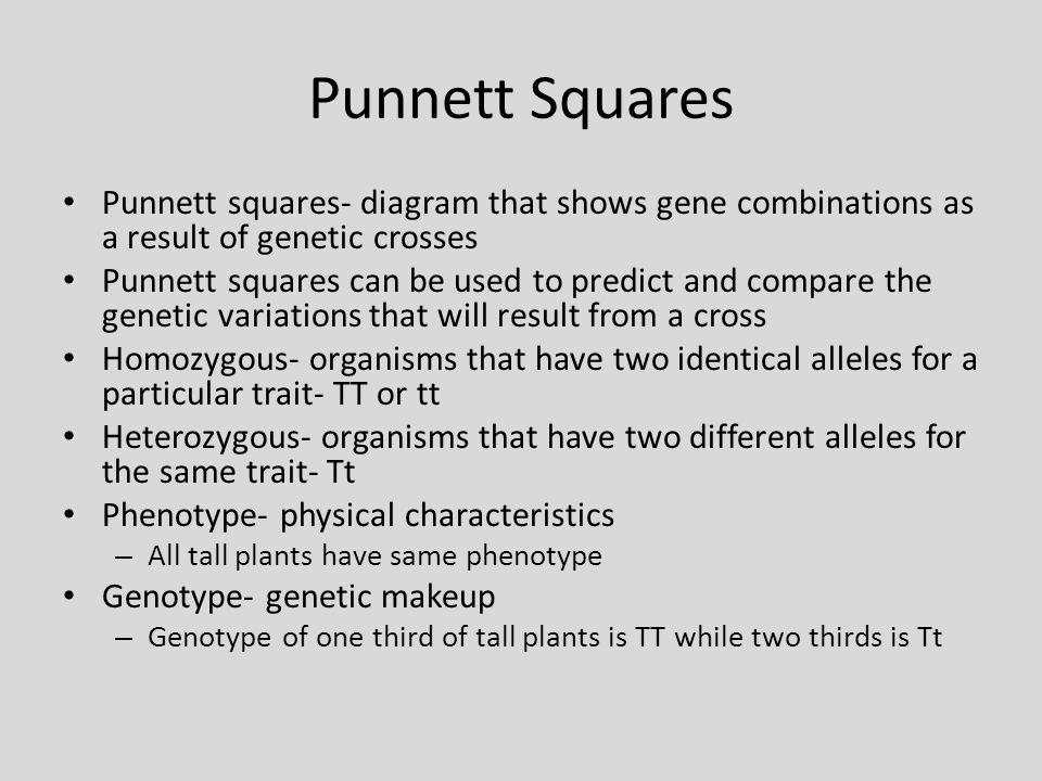 Punnett Squares Punnett squares- diagram that shows gene combinations as a result of genetic crosses.