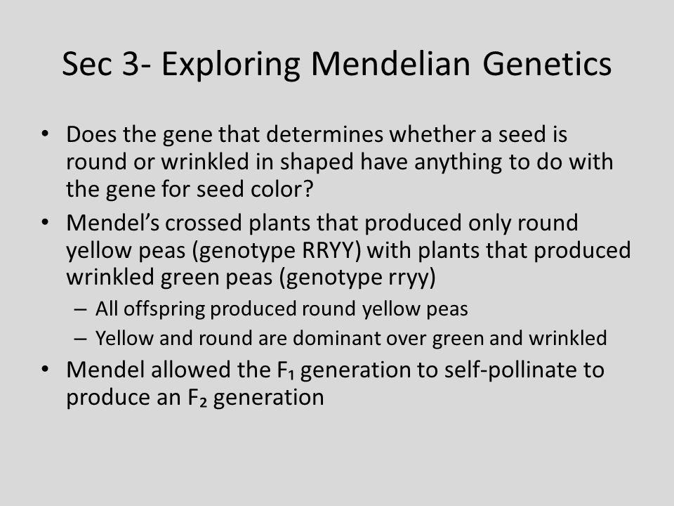 Sec 3- Exploring Mendelian Genetics
