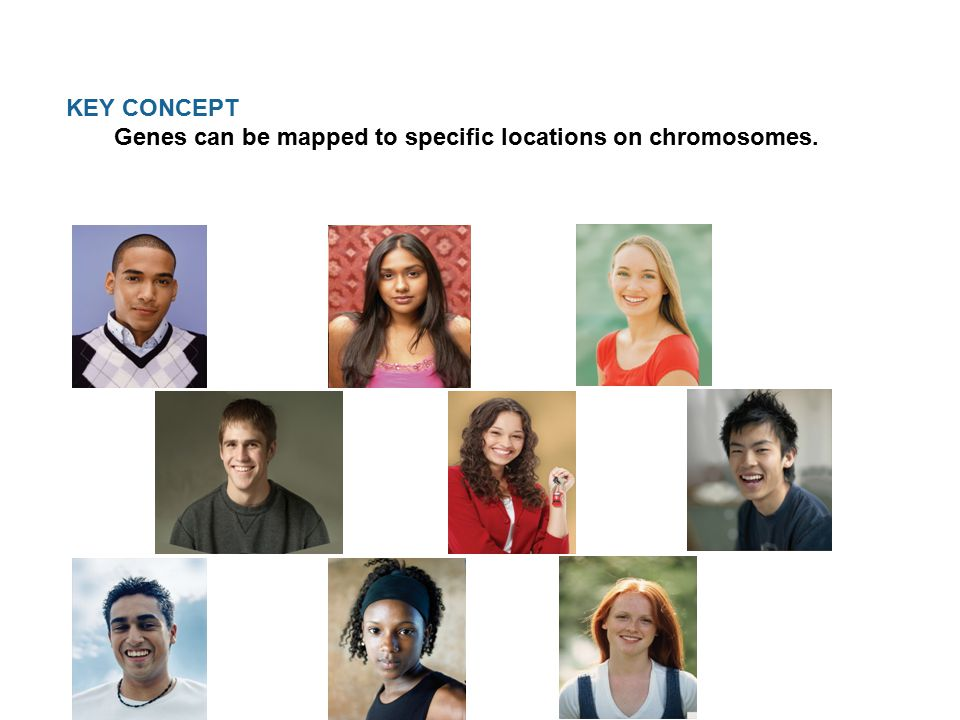 KEY CONCEPT Genes can be mapped to specific locations on chromosomes.