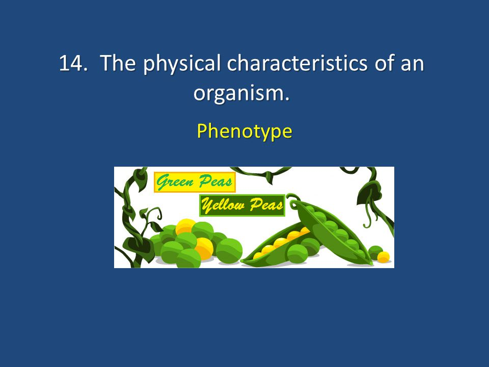 14. The physical characteristics of an organism.