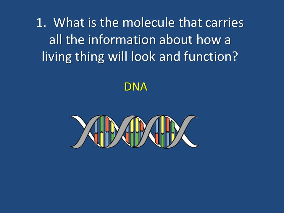 1. What is the molecule that carries all the information about how a living thing will look and function
