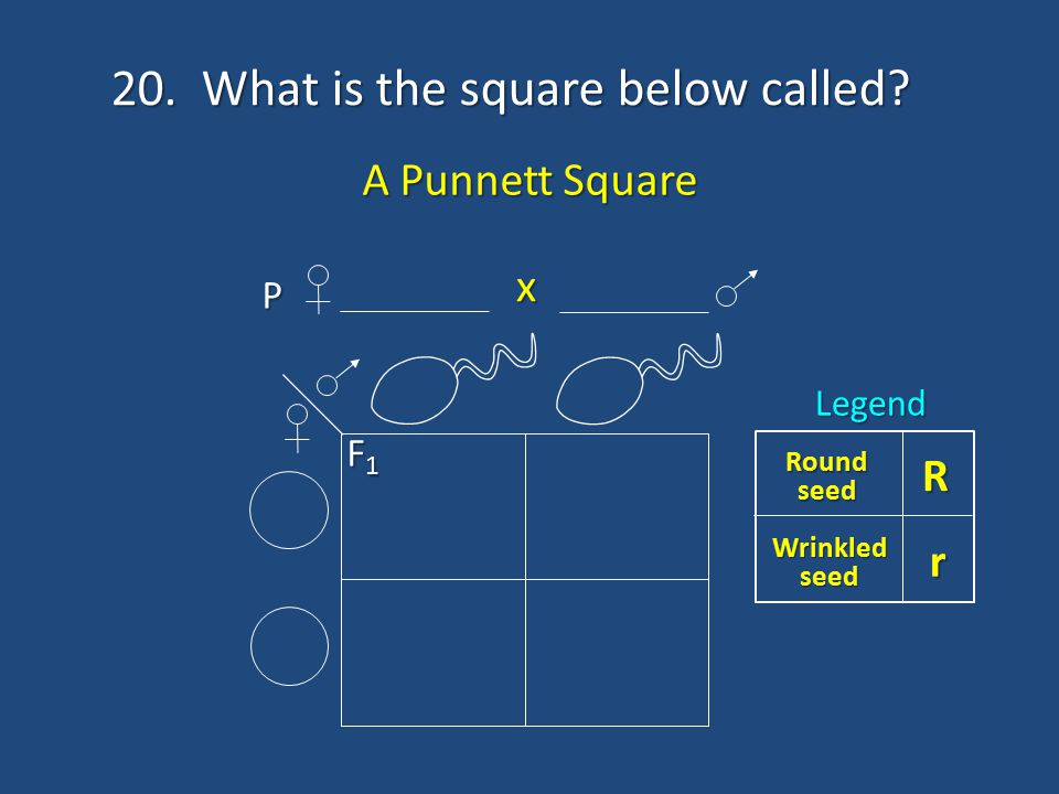 20. What is the square below called