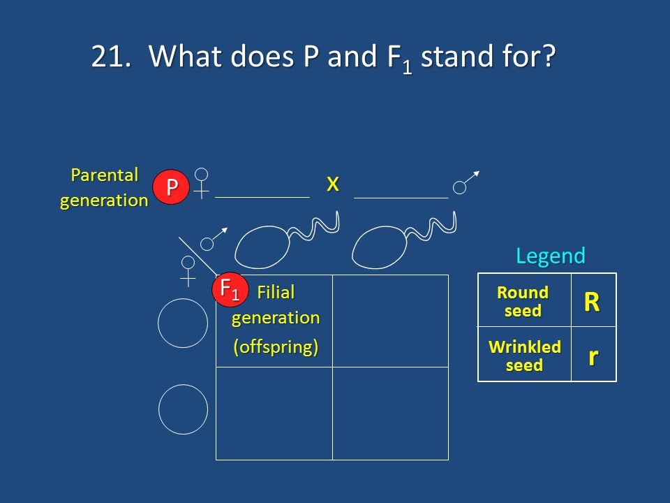 21. What does P and F1 stand for