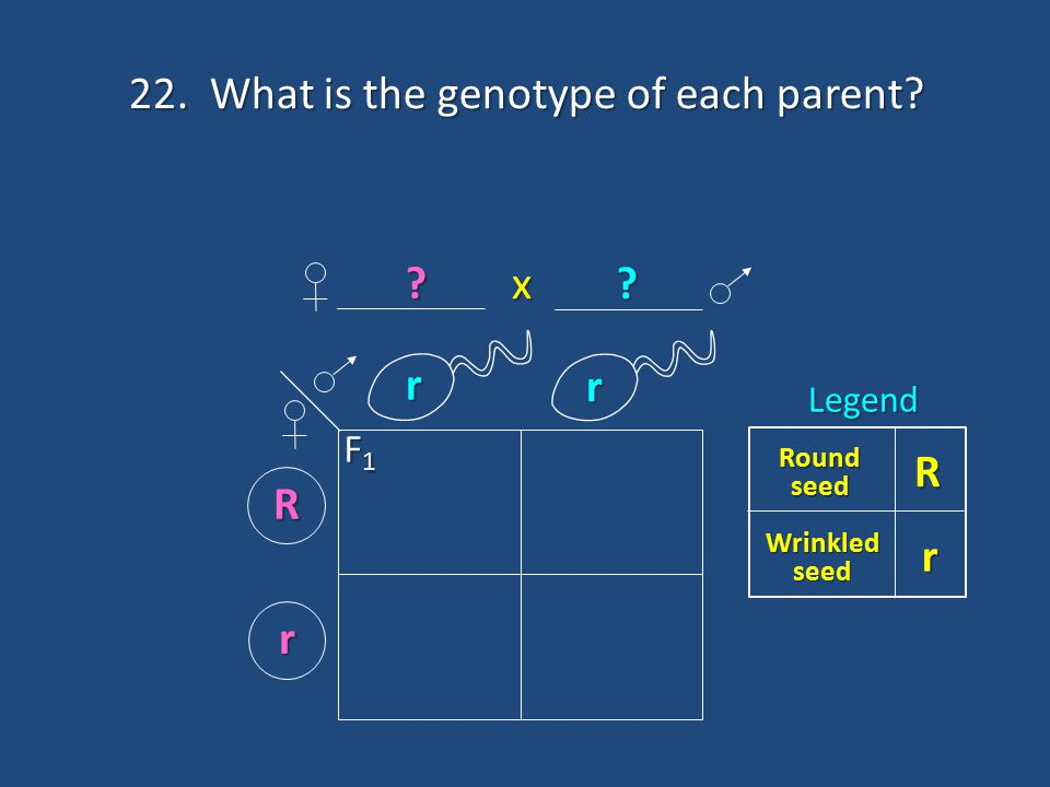 22. What is the genotype of each parent