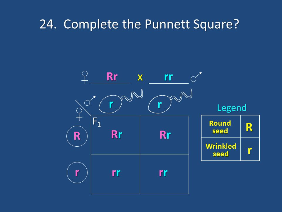 24. Complete the Punnett Square