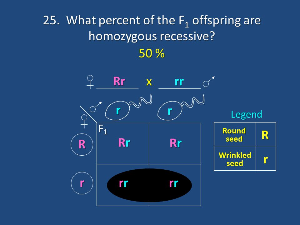 25. What percent of the F1 offspring are homozygous recessive