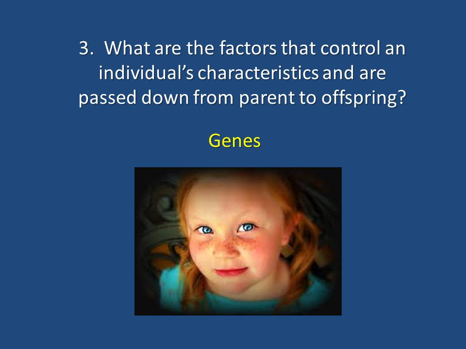 3. What are the factors that control an individual's characteristics and are passed down from parent to offspring