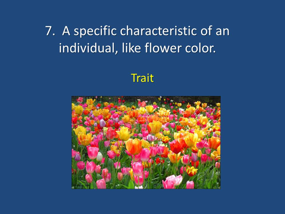 7. A specific characteristic of an individual, like flower color.