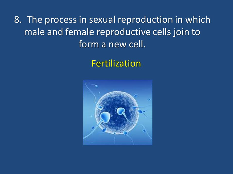 8. The process in sexual reproduction in which male and female reproductive cells join to form a new cell.
