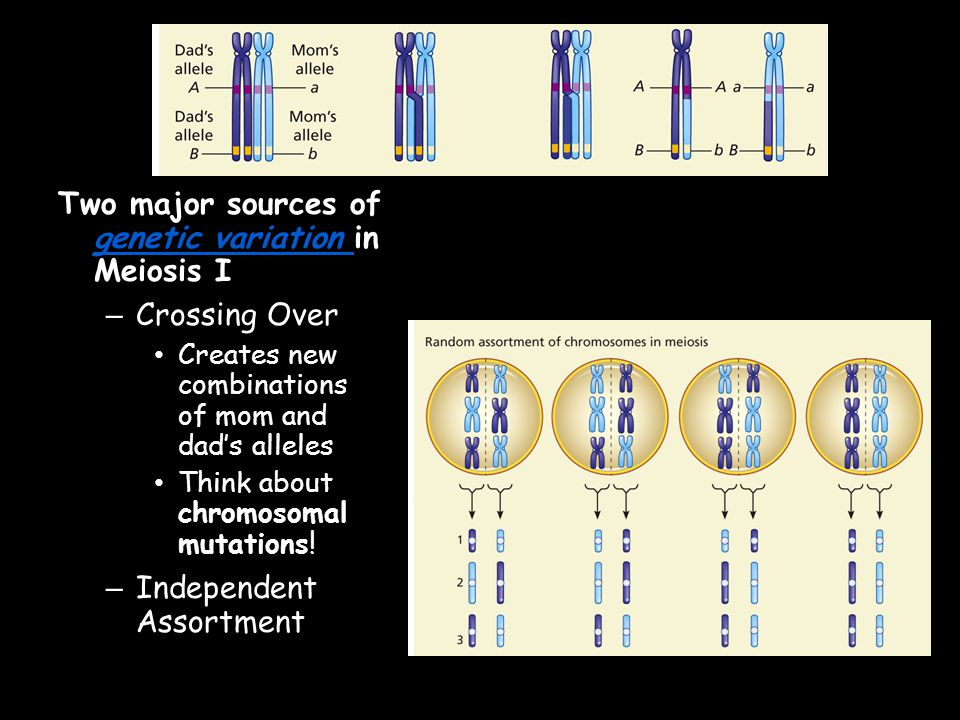 Two major sources of genetic variation in Meiosis I