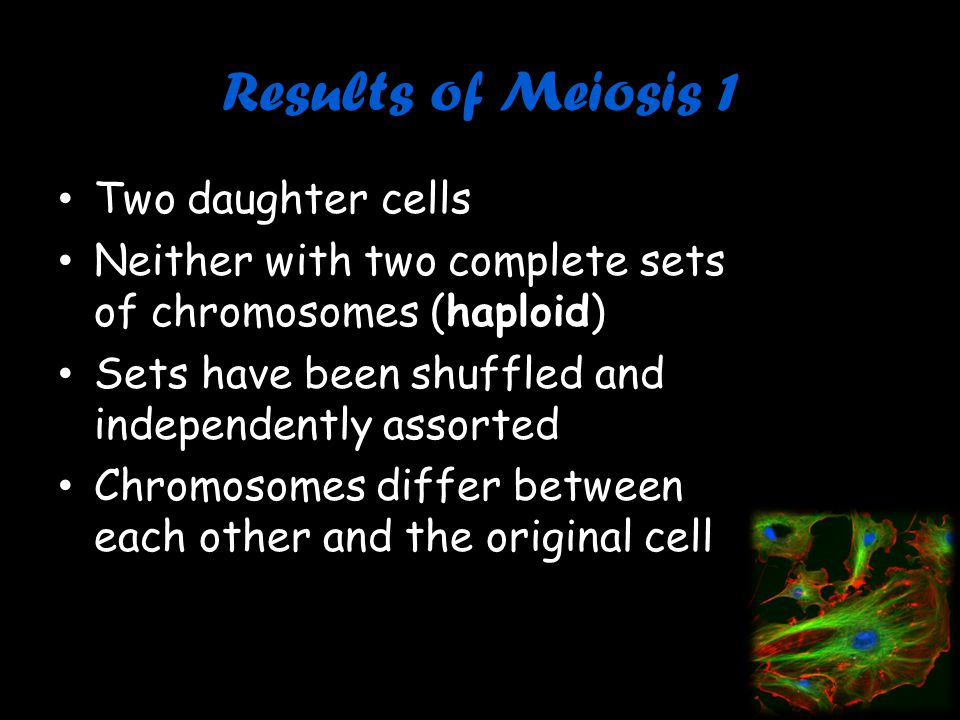 Results of Meiosis 1 Two daughter cells