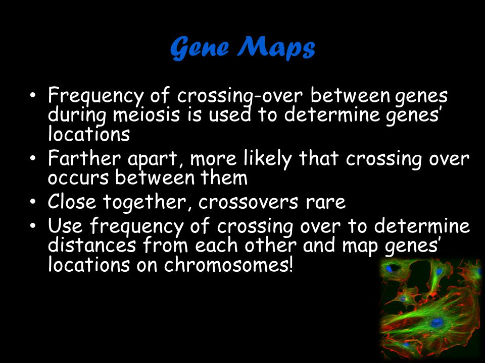Gene Maps Frequency of crossing-over between genes during meiosis is used to determine genes' locations.