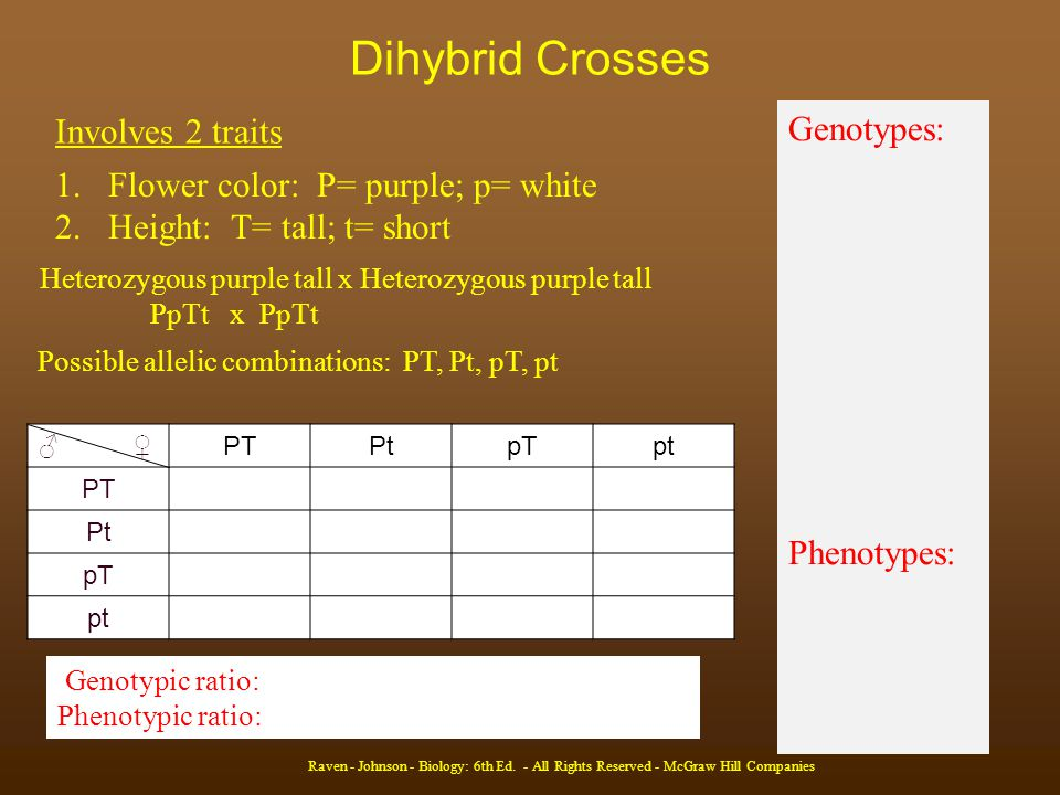 Dihybrid Crosses Involves 2 traits Genotypes: