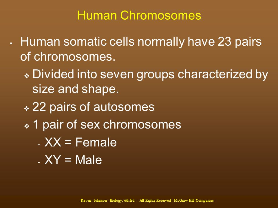 Human somatic cells normally have 23 pairs of chromosomes.