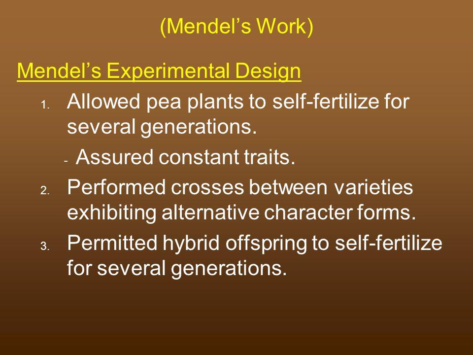 (Mendel's Work) Mendel's Experimental Design. Allowed pea plants to self-fertilize for several generations.
