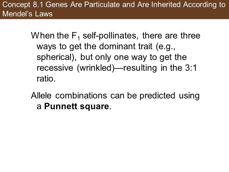 Allele combinations can be predicted using a Punnett square.