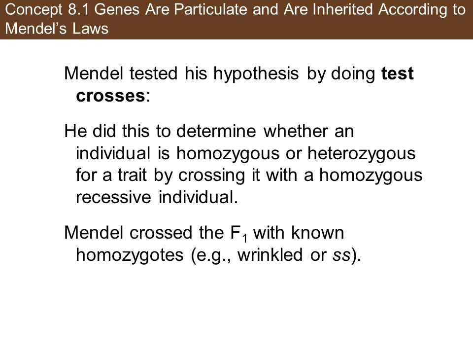 Mendel tested his hypothesis by doing test crosses: