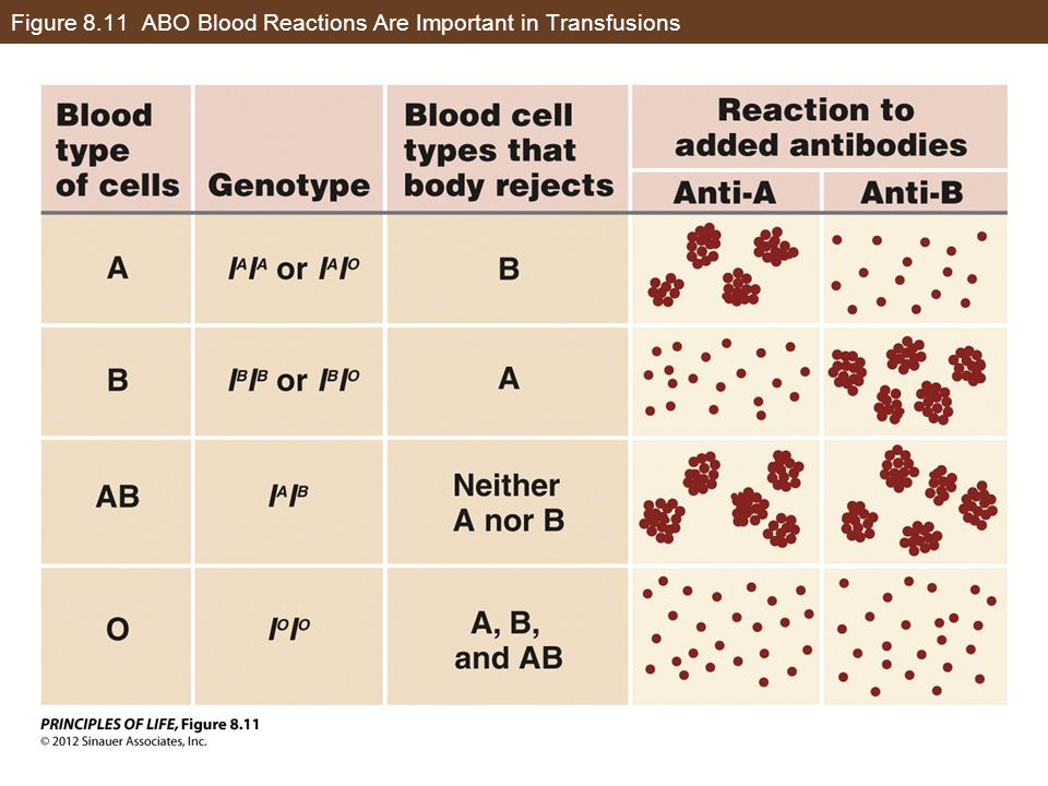 Figure 8.11 ABO Blood Reactions Are Important in Transfusions