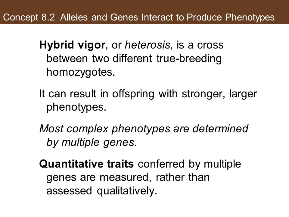 Concept 8.2 Alleles and Genes Interact to Produce Phenotypes