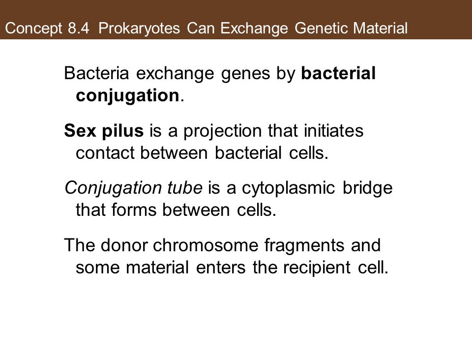 Concept 8.4 Prokaryotes Can Exchange Genetic Material