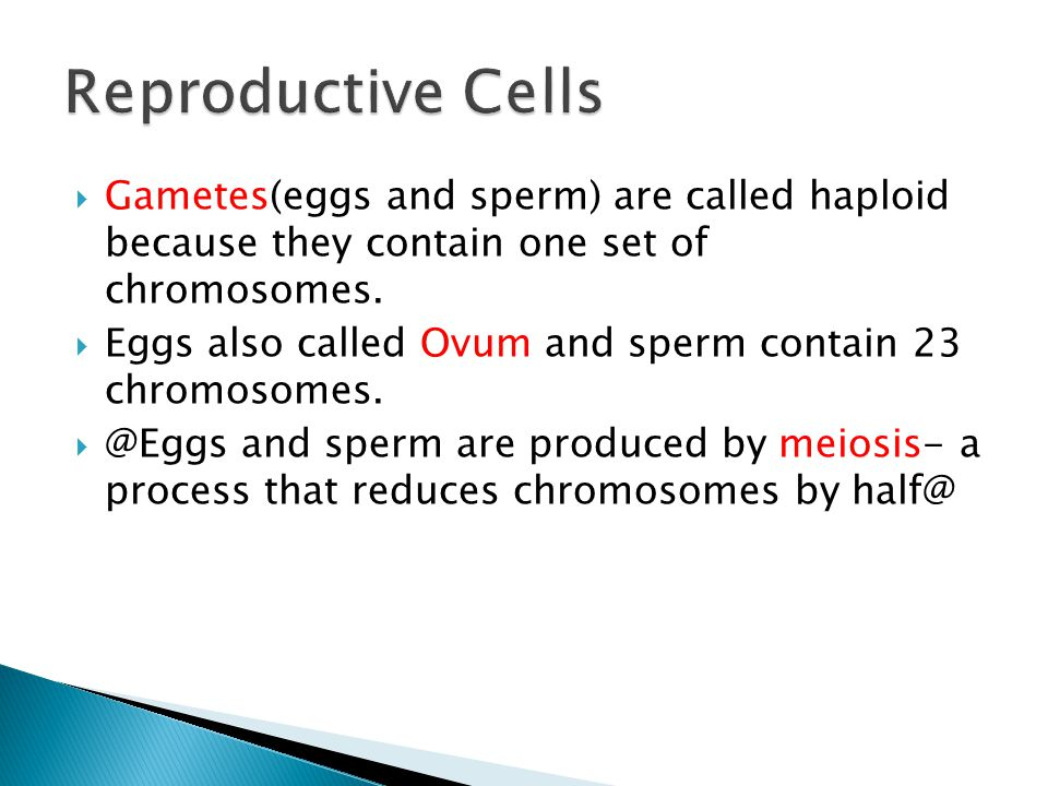 Reproductive Cells Gametes(eggs and sperm) are called haploid because they contain one set of chromosomes.
