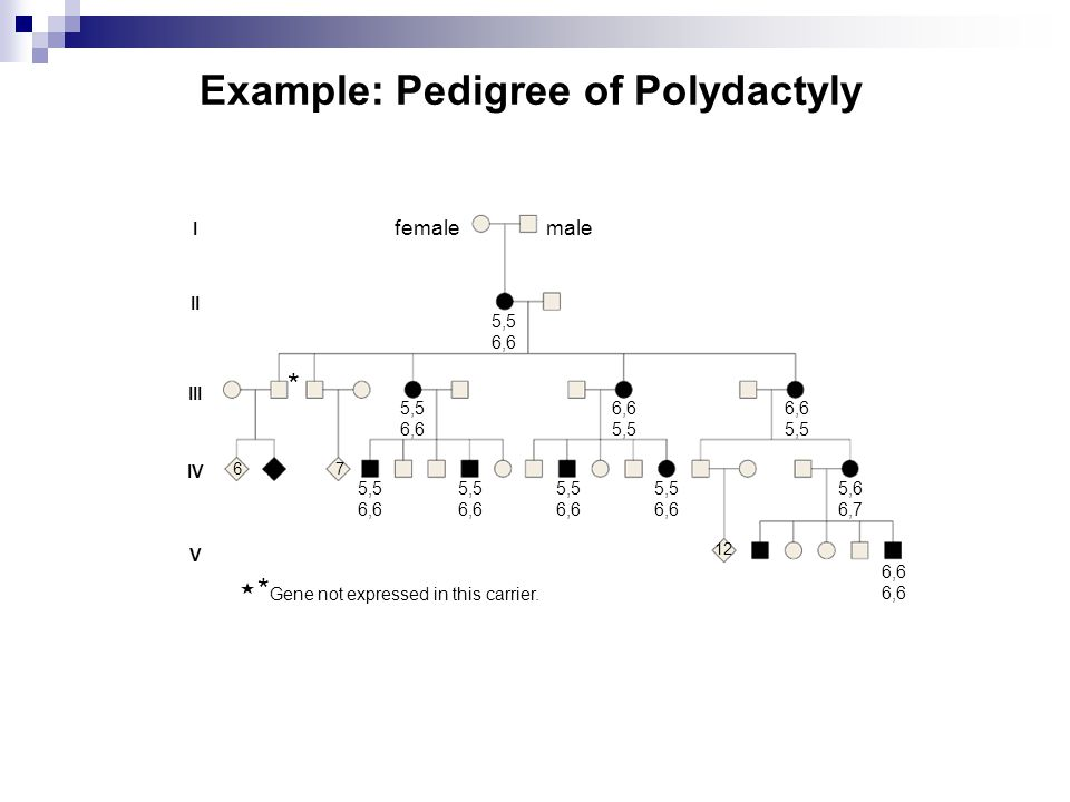 Example: Pedigree of Polydactyly