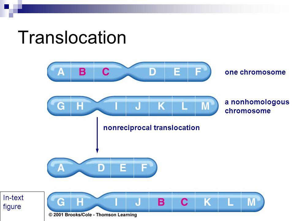 Translocation one chromosome a nonhomologous chromosome