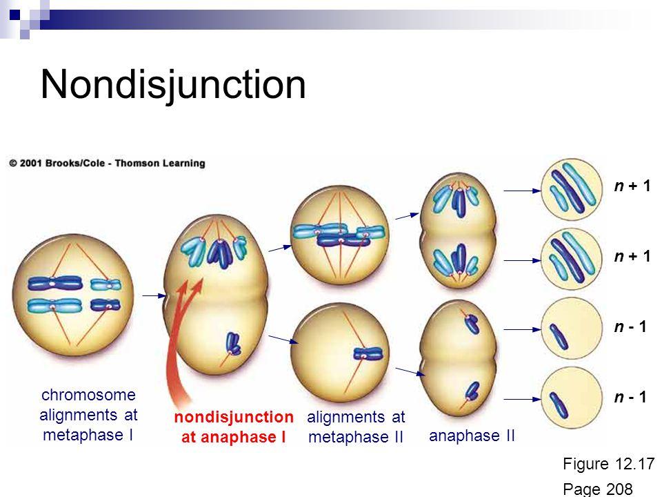 nondisjunction at anaphase I