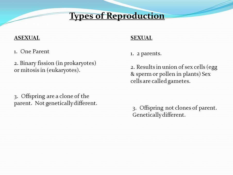Types of Reproduction ASEXUAL SEXUAL 1. One Parent 1. 2 parents.