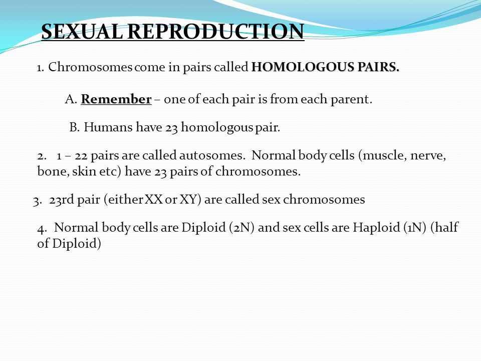 What are sex cells called images 49